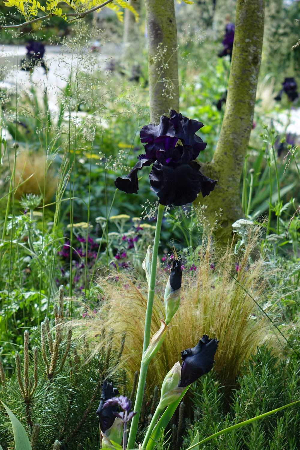 10 ideas we loved at chelsea flower show 2018 modern gardens magazine all about the black iris flower of the show izmirmasajfo