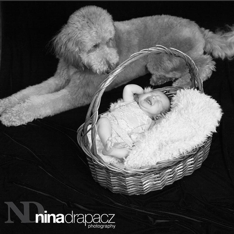 newbornportraits.jpg