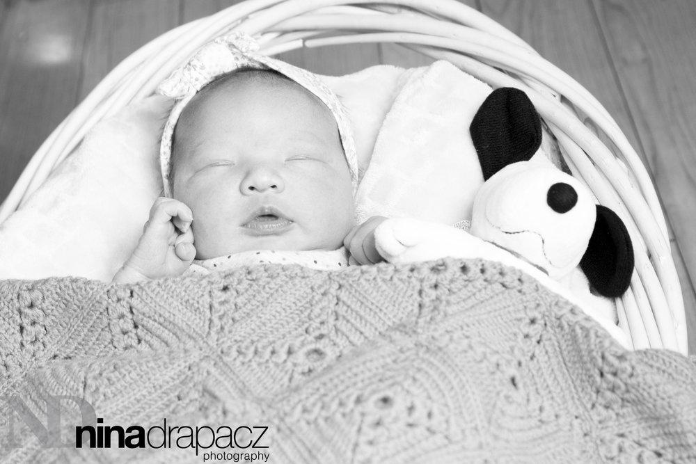 newbornwithanimal.jpg