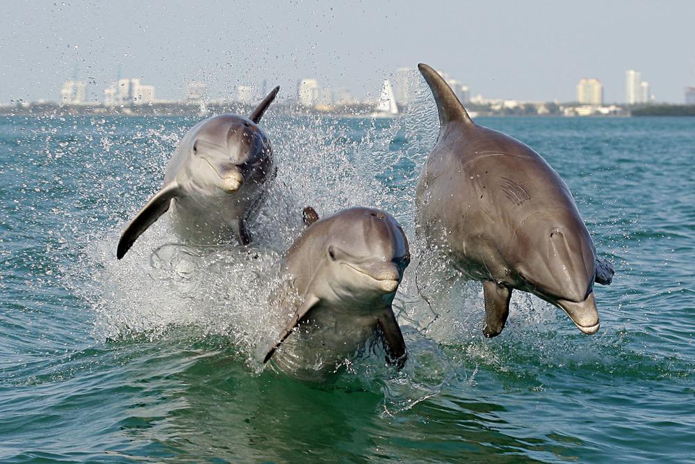 Dolphin_3806 crop.jpg