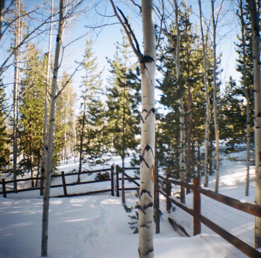 snowy forest film photo