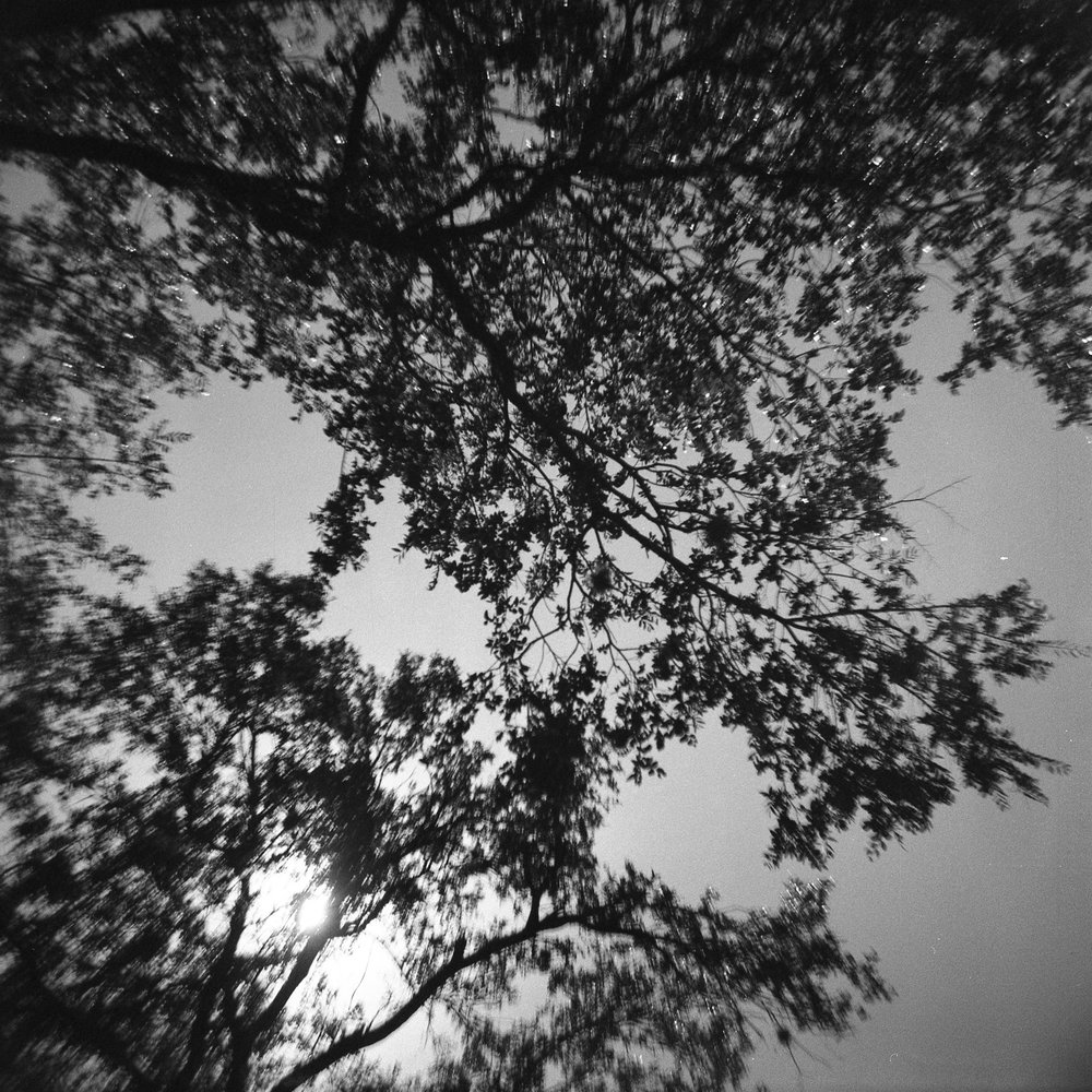 120mm black and white photo with Diana camera