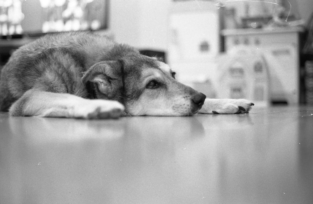 black and white film photo of a cute dog