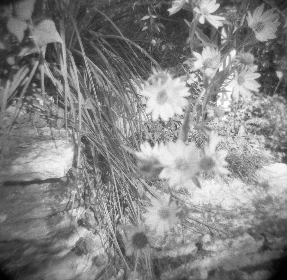 what does Ilford Delta 3200 look like on a Holga outdoors