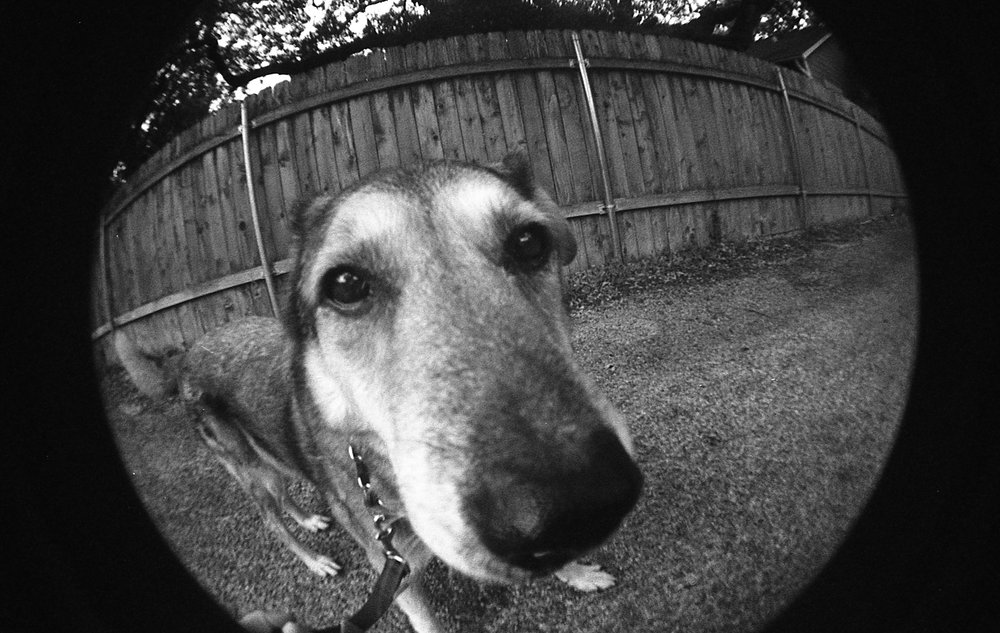 close up of a dog on fisheye lens
