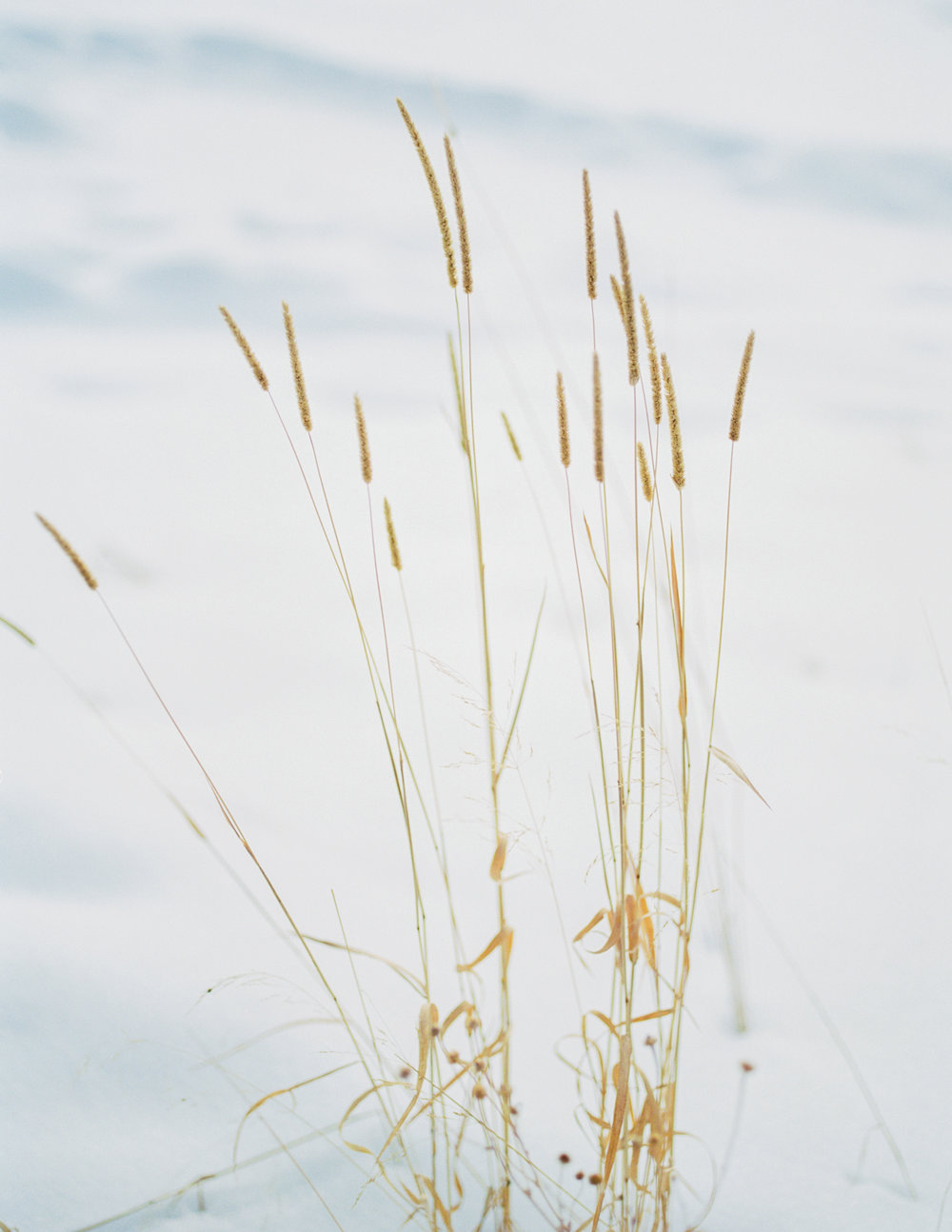 WinterEditorial-171.jpg