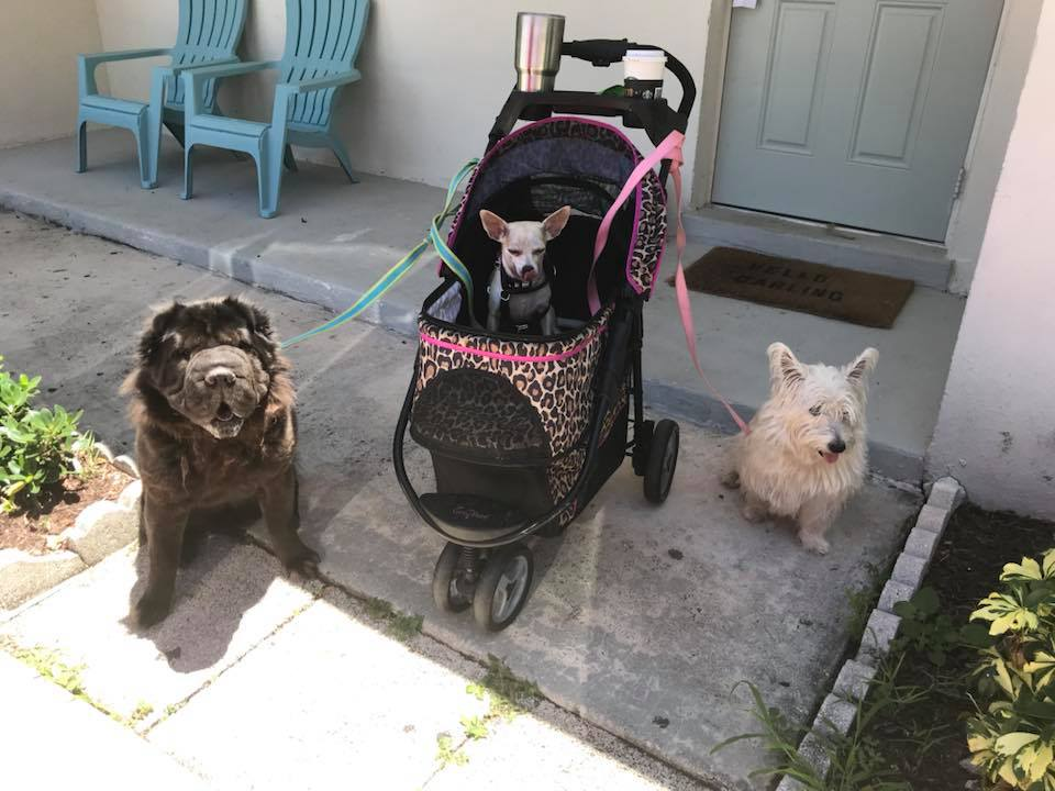 Zeke, Princess & Teddy    At Little Ocean Yoga, we have plenty of helpers at the yoga studio. Need help with your downward dog? We have three professionals to show you how for the simple price of a tummy rub or a scratch behind the ears.