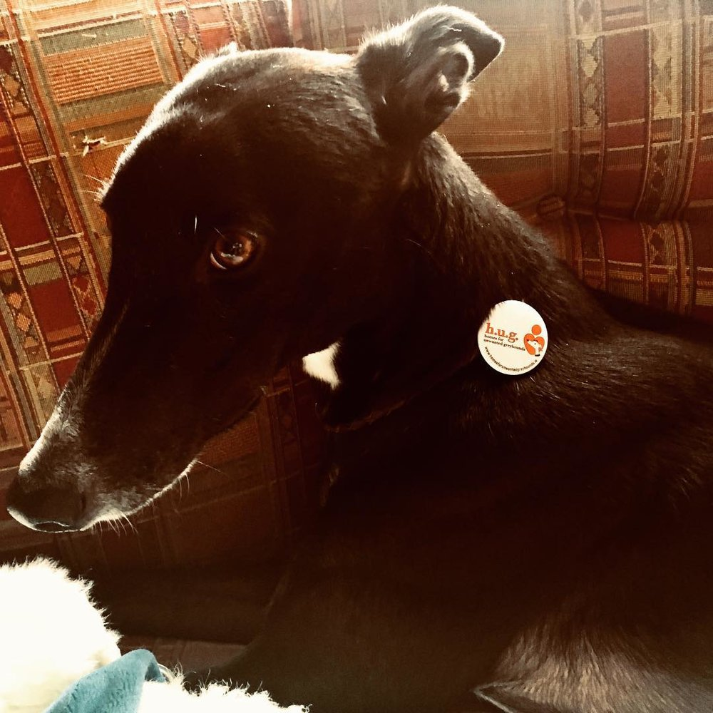 Kit models badges for Homes for Unwanted Greyhounds via Jessica Reid