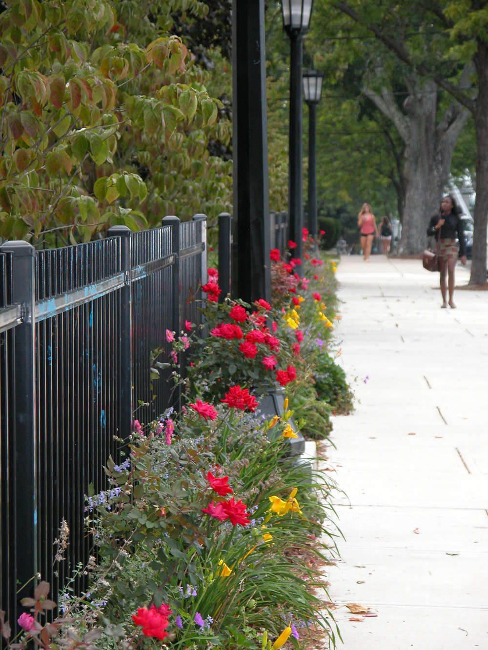 Tufts University   Professors Row Streetscape
