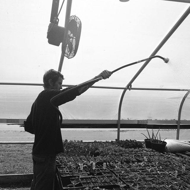 #greenhouse #transplants #alexanderacres @lomaxfarm