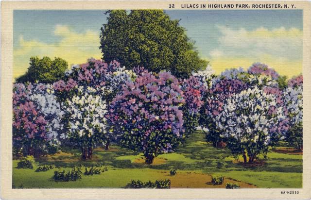 Enhanced_Lilacs in Highland Park_rpc1730a.jpg