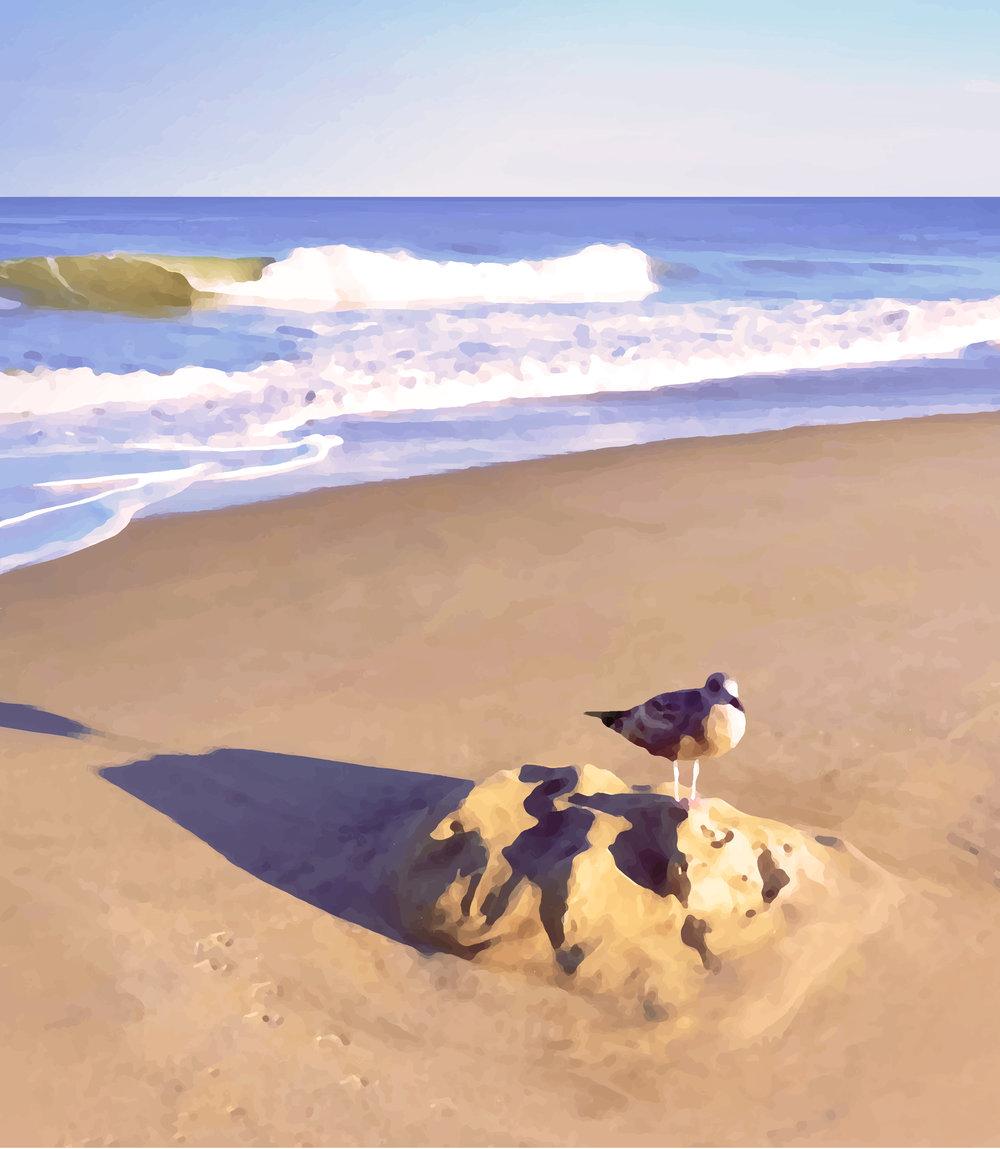Ocean City Seagull