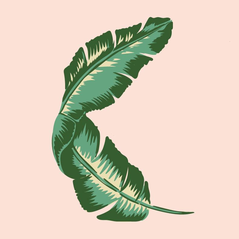 Palm Branch Illustration