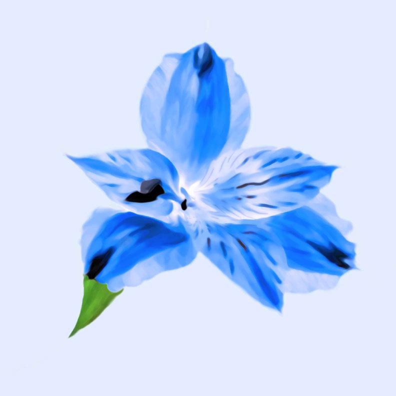 Cool Blue Floral