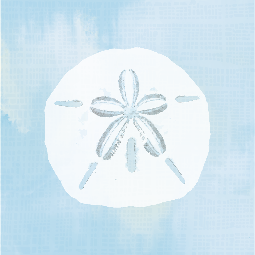 Sand Dollar_43x43-square-01.png