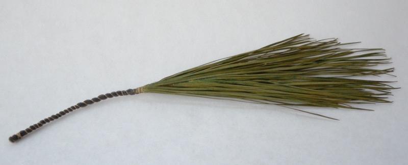 white pine wisp, 2004