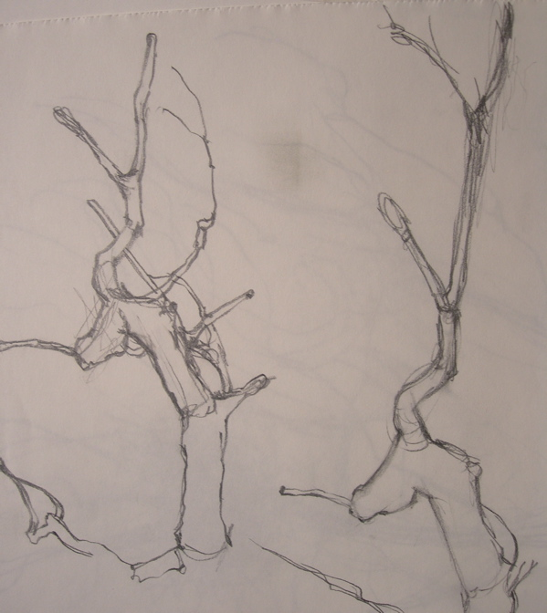 treesudydetail400.JPG