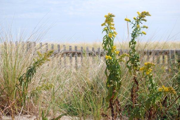 beach-flowers.jpg