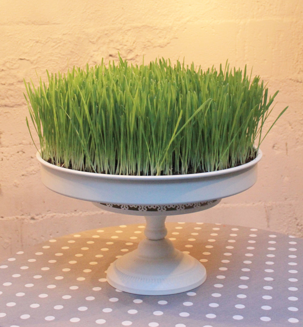 Custom Grass Cake by Laura Phelps Rogers 3240design llc.jpg