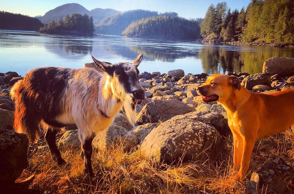 Cathers Cove-Dog and Goat.jpg