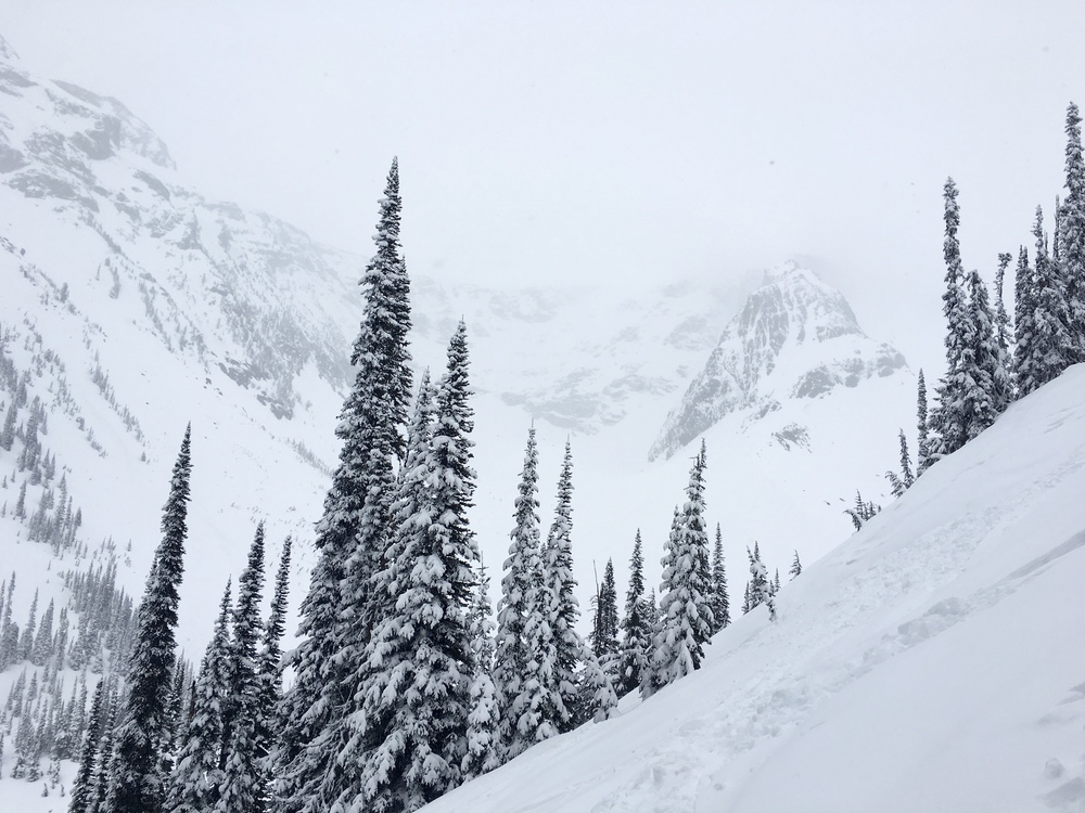 Shot from Triangle Trees looking up at Youngs Peak, hiding in the upper right.  Photo: Zach