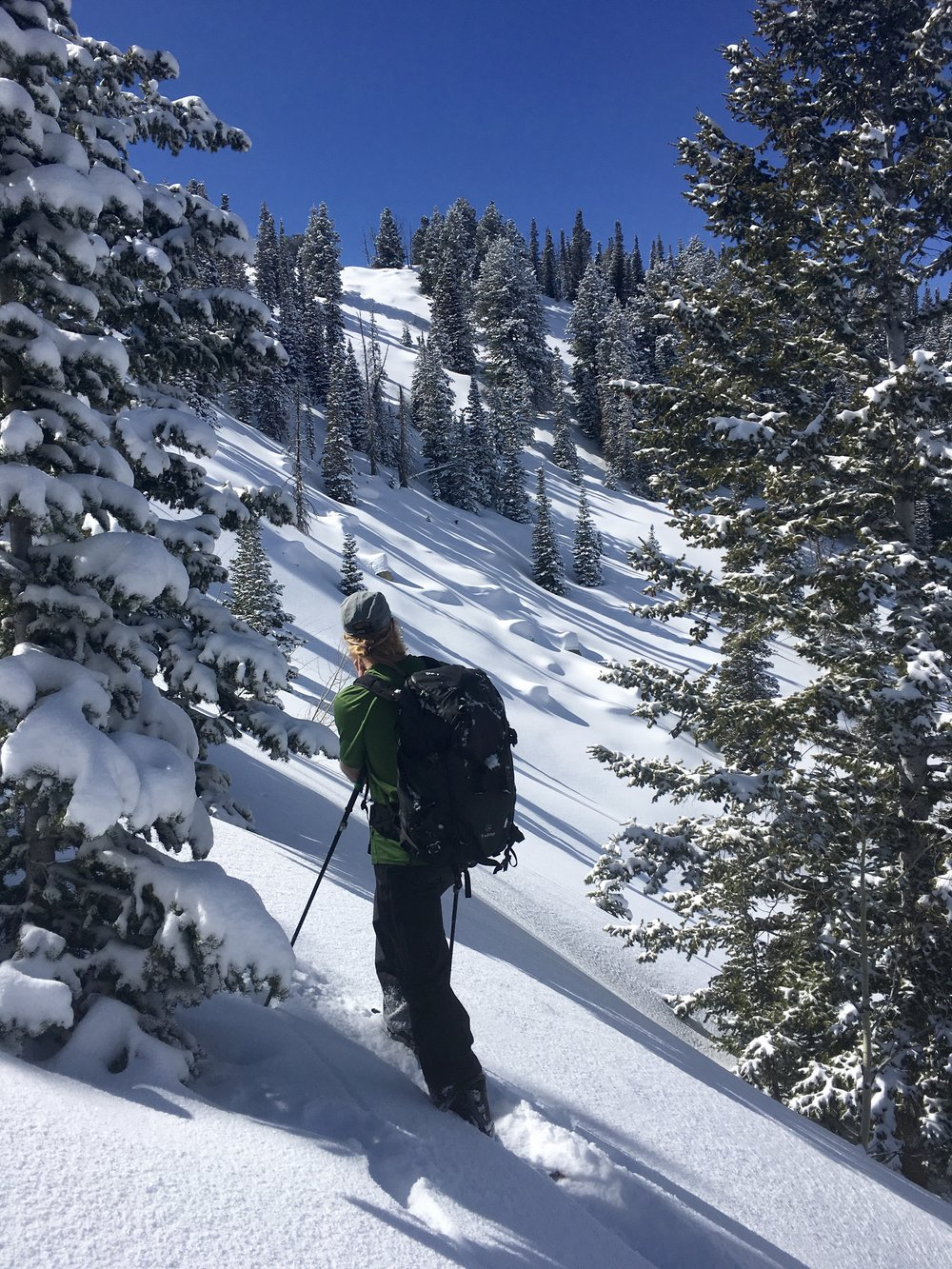 Big Cottonwood Canyon, UT  Photo: Gazing into some hits in Silver Mine Meadow