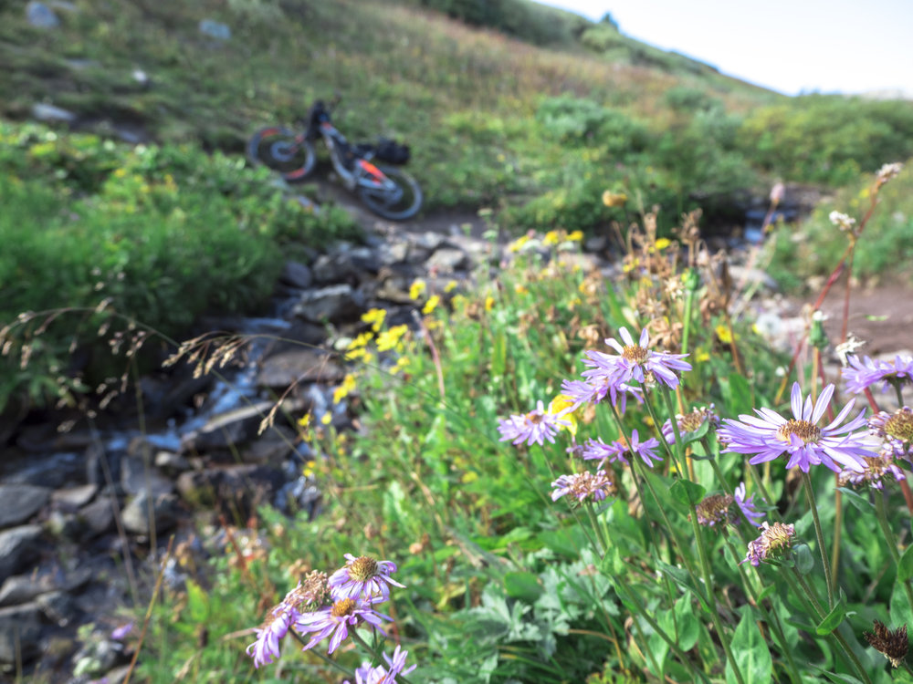 Flowers at searle pass.JPG