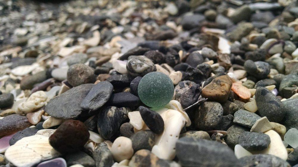 Sea marble hiding in the rocks.