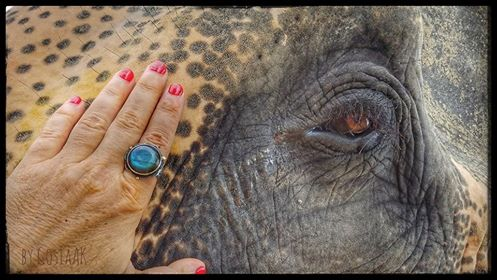An Elephant's Eye