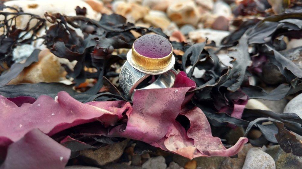 A very rare purple sea glass nestled in kelp near the beach where Jane originally found it.