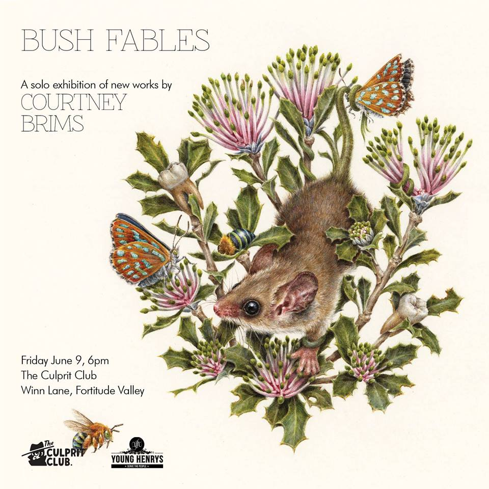 bush fables courtney brims brisbane the culprit club fortitude valley