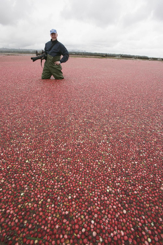 Cranberry me-4.jpg