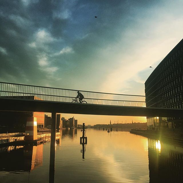 Summer glory for the early morning bikers #cyclingcopenhagen #rideinstyle #harbourcircle #visitdenmark #copenhagen #bridges #cykelslangen #copenhagenvisitorservice #architecture #summer #picoftheday