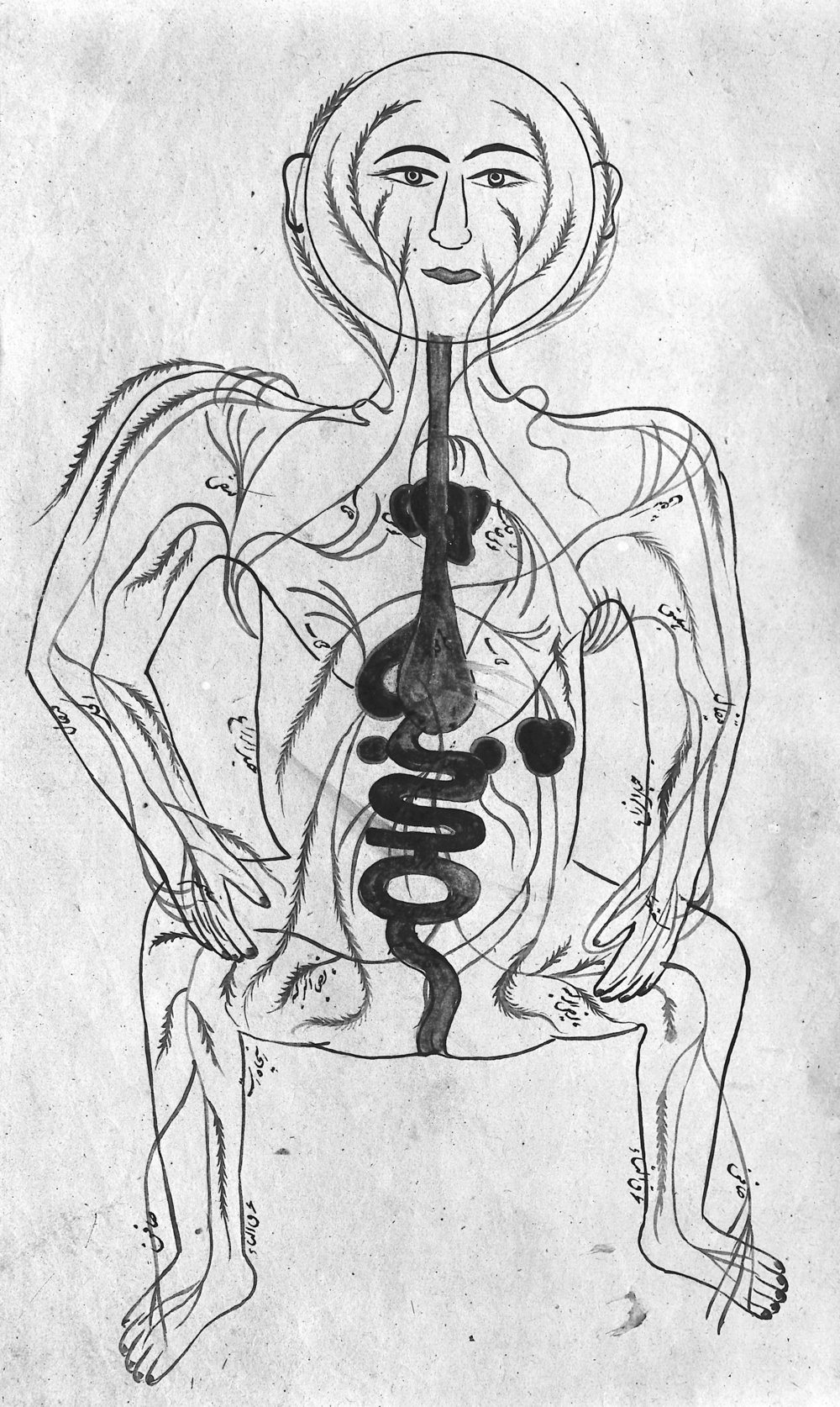 Human_figure_showing_arteries_and_viscera,_Persian,_18th_C_Wellcome_M0007240.jpg