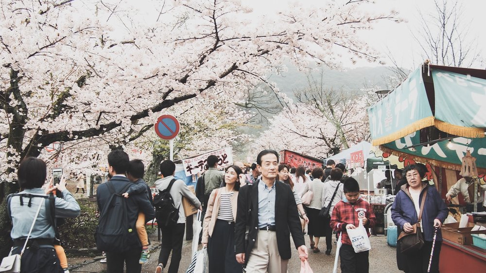 Maruyama Park in Spring with Cherry Blossoms in Kyoto