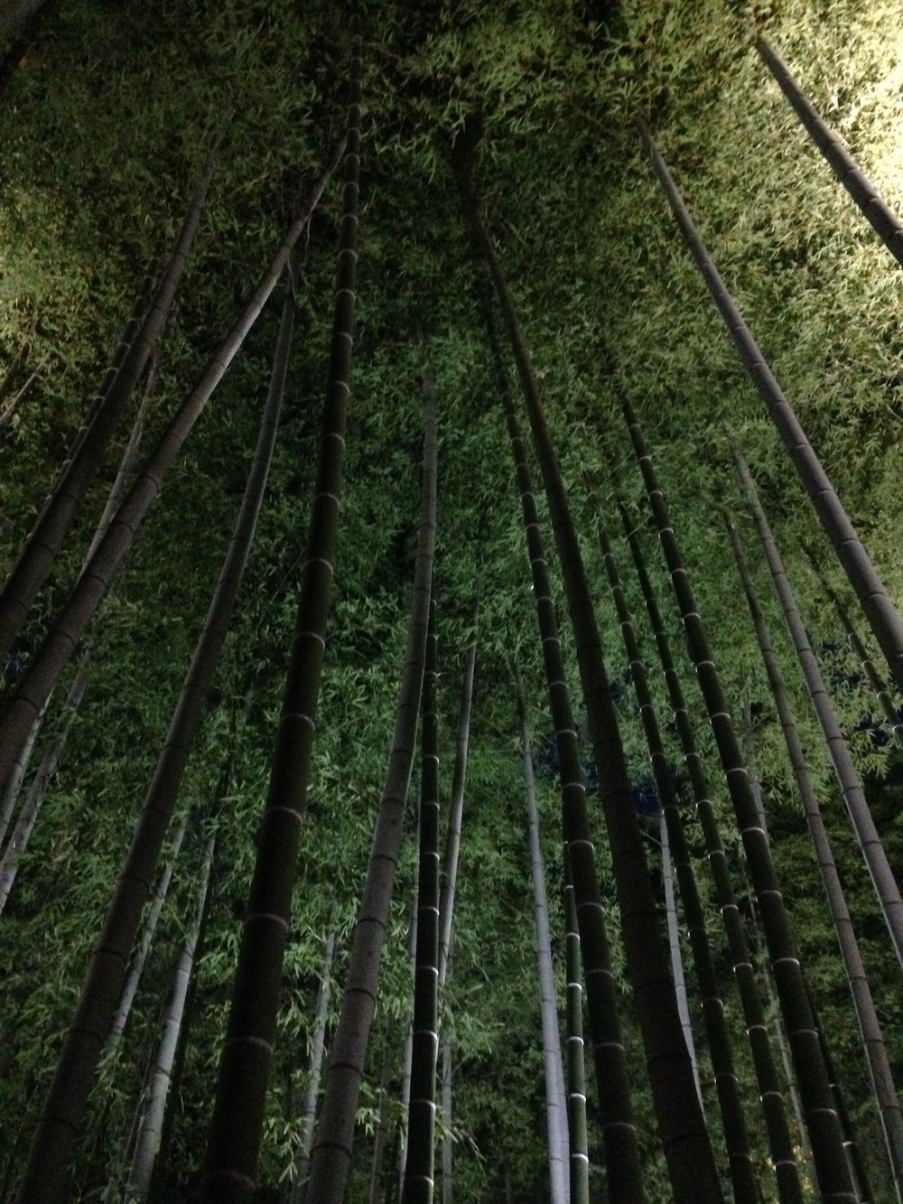 Beautiful bamboo forest, no filters or editing needed.