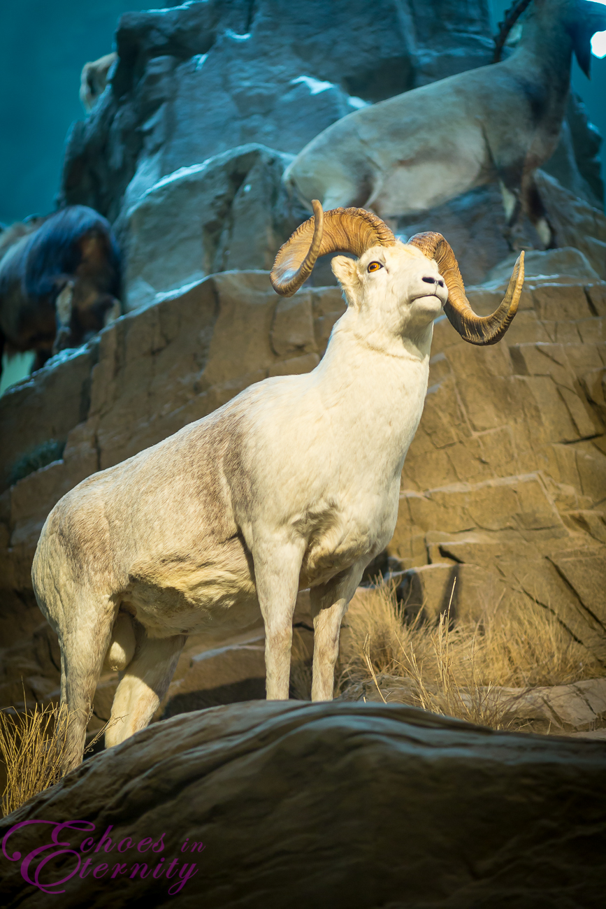 Wildlife Museum Animals 33.jpg