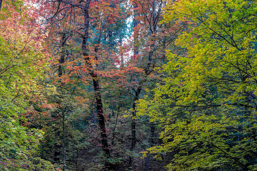 Fall Colors Mt. Lemmon Tucson Arizona Landscape Photographer 02