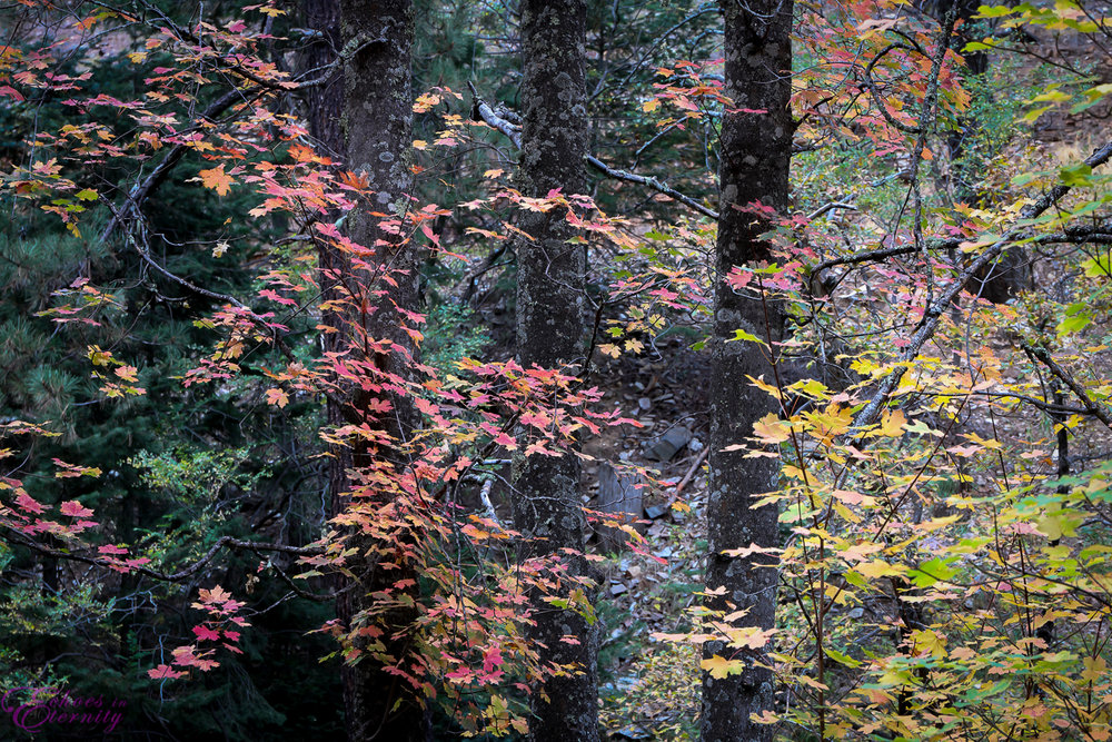 Fall Colors Mt. Lemmon Tucson Arizona Landscape Photographer 03