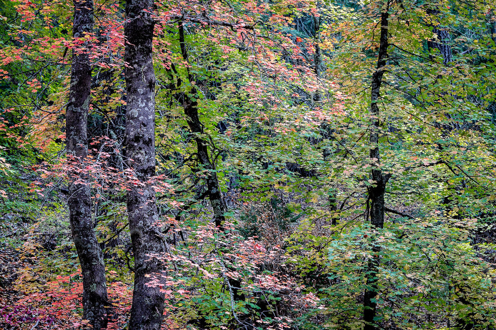 Fall Colors Mt. Lemmon Tucson Arizona Landscape Photographer 04