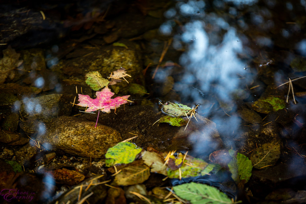Fall Colors Mt. Lemmon Tucson Arizona Landscape Photographer 10
