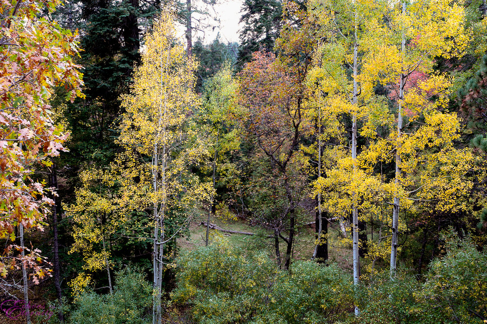 Fall Colors on Mt. Lemmon06.jpg