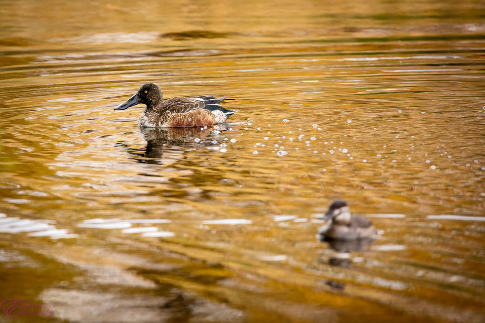 Tucson Wildlife and Waterfowl Photography 02