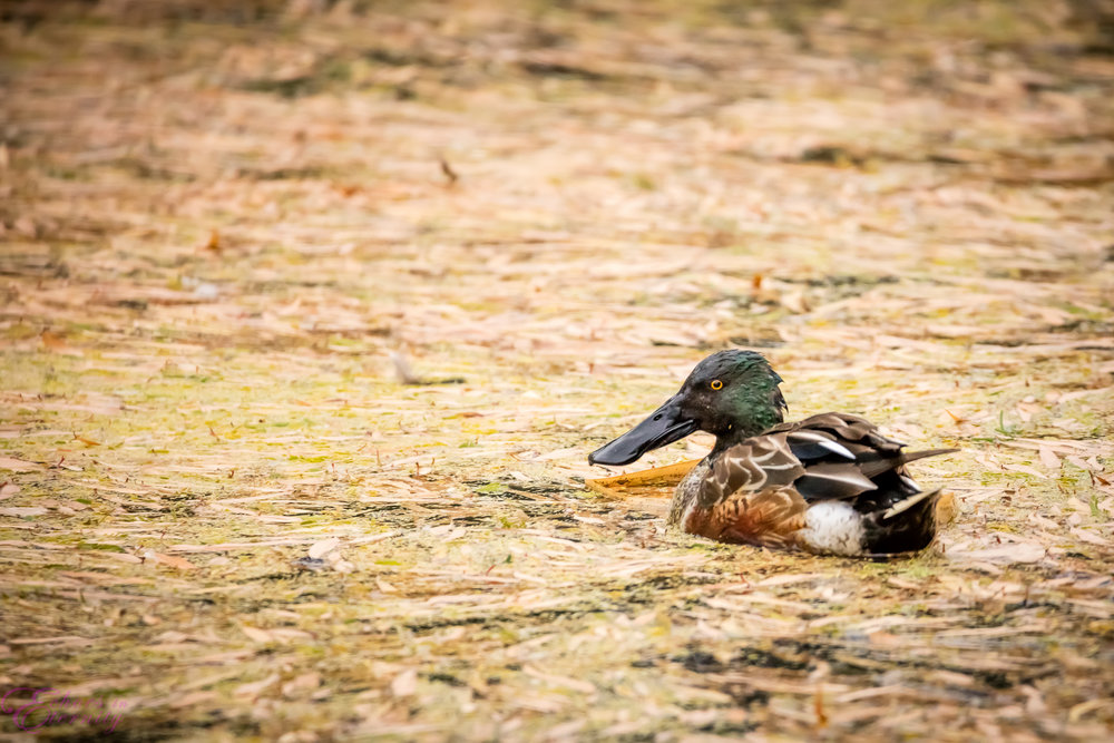 Tucson Wildlife and Waterfowl Photography 08