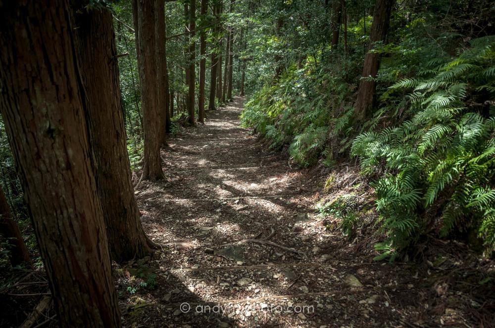 Copy of Nakehachi trail-Kumano Kodo Trek