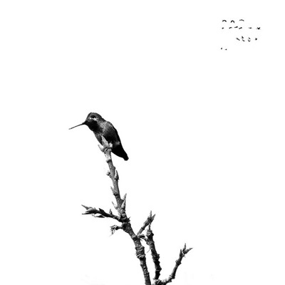 zen-simplicity-life-written-minimalist