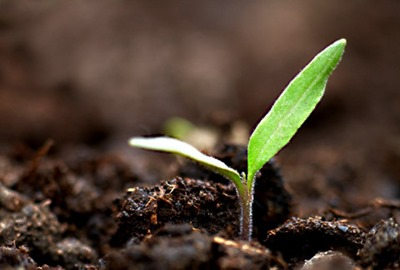 seedling-leadership-life-written