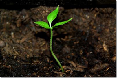 seeds-leadership-life-written