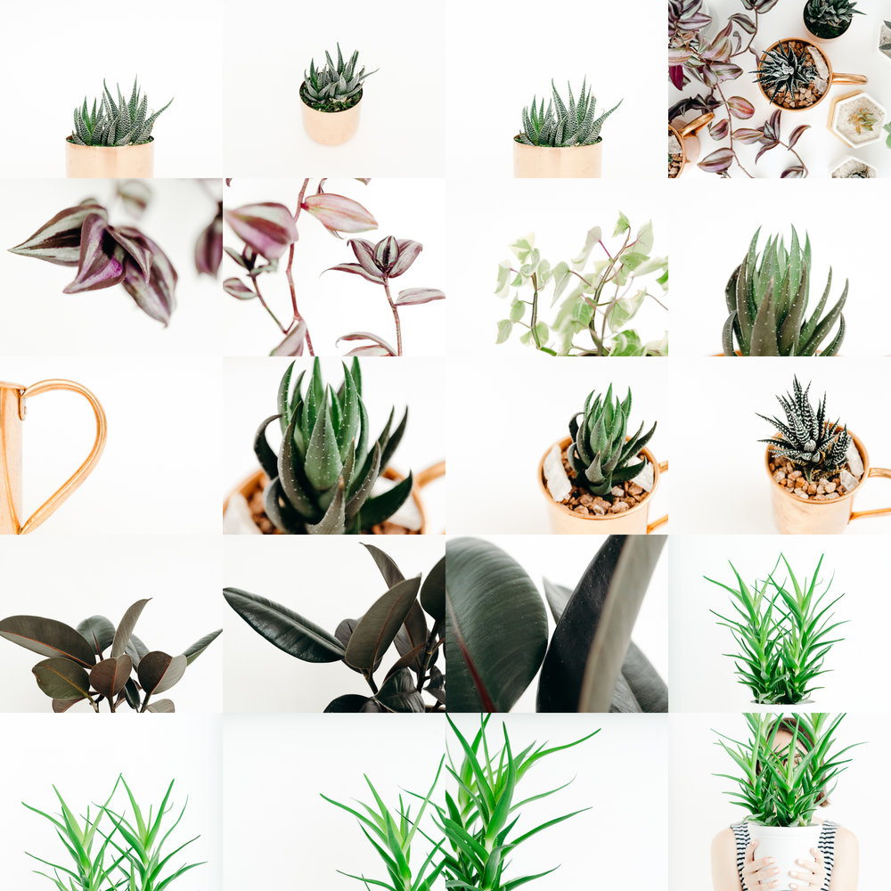 Plants - Some of my favorite house plants photographed to appeal to modern, lifestyle, and plant-loving brands.