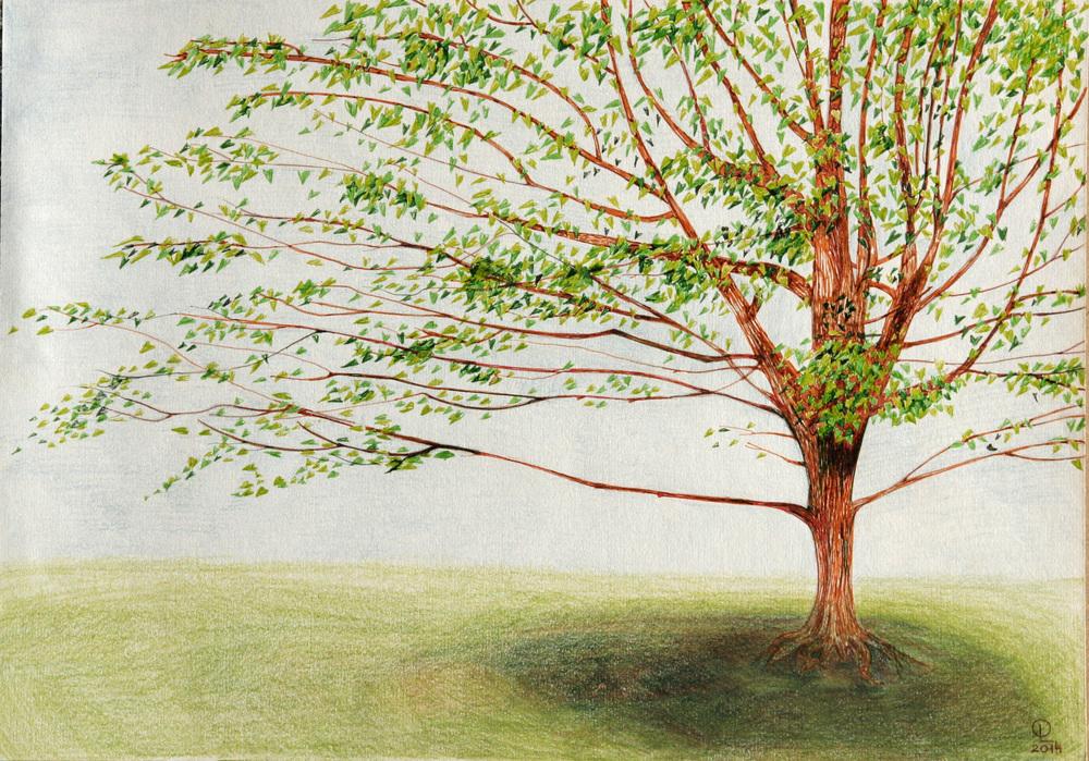 The_treeWaterloo1.jpg